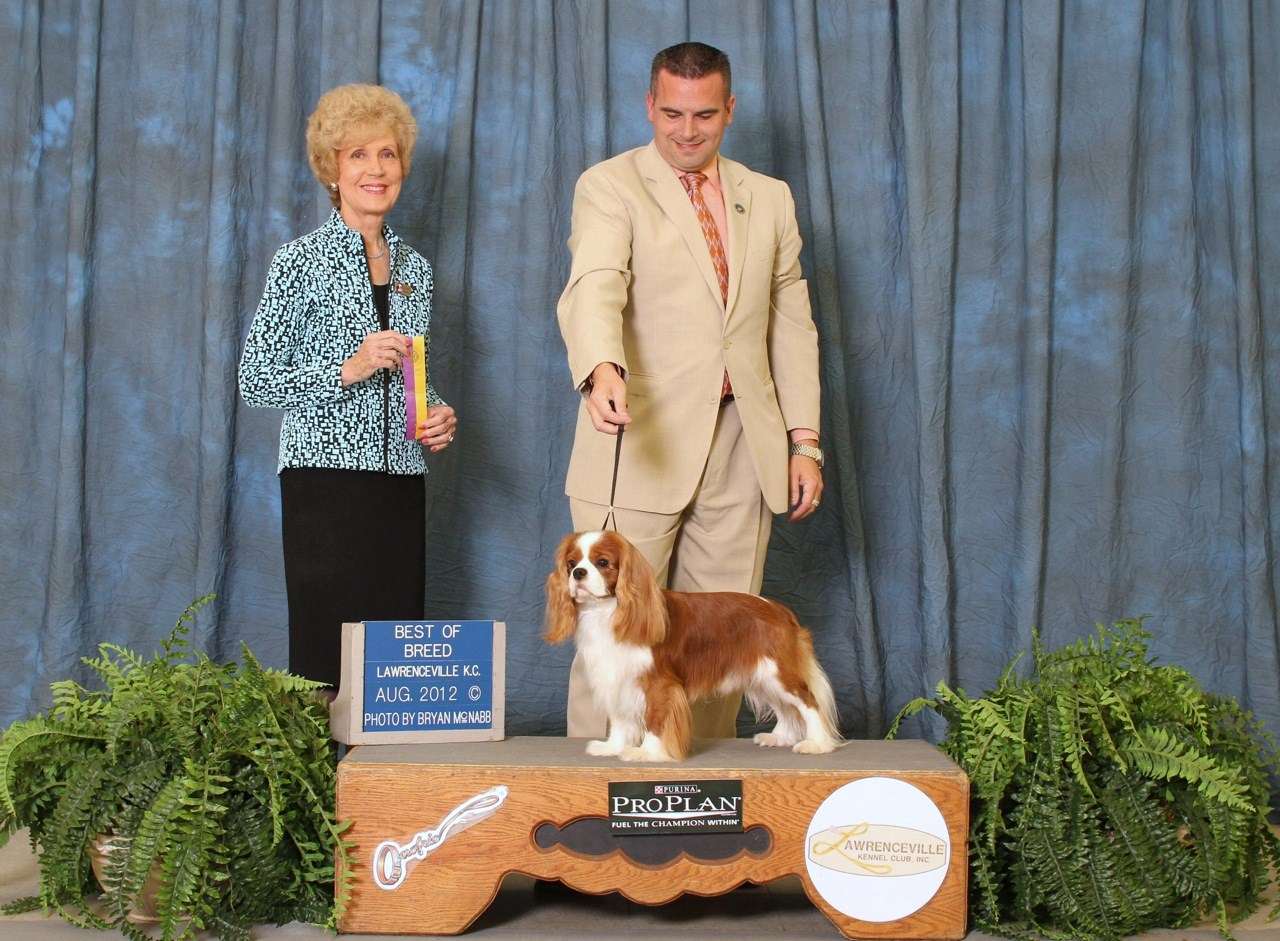 Ch Castlekeep Clooney Brown Cavalier Best of Breed
