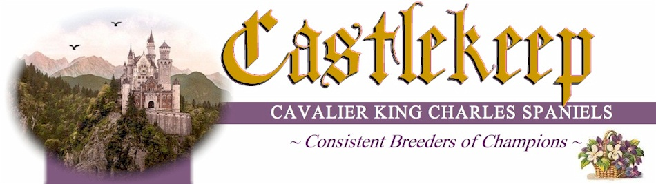 Cavalier King Charles Spaniels by Castlekeep Cavaliers - Breeders of Cavalier King Charles Spaniel Puppies in Glendale Arizona