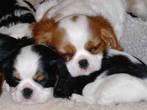 Spaniels, The - Stormy Weather