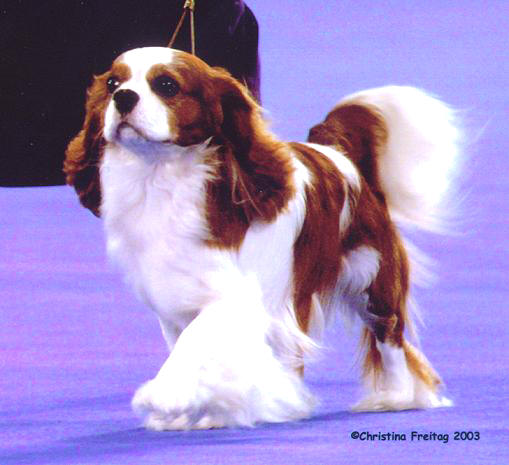 Best Of Winners In Dog Shows