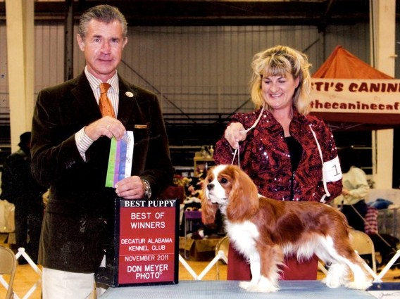 Castlekeep Clooney Brown Winners Cavalier