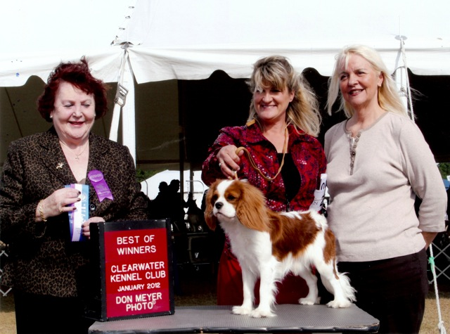 Castlekeep Sugar Daddy Winners Cavalier